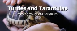 Moving Pet Terrariums in Victoria BC