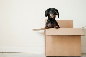 plan a move around kids and pets