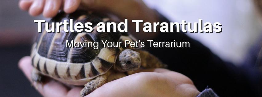 Moving Pet Terrariums in Victoria BC